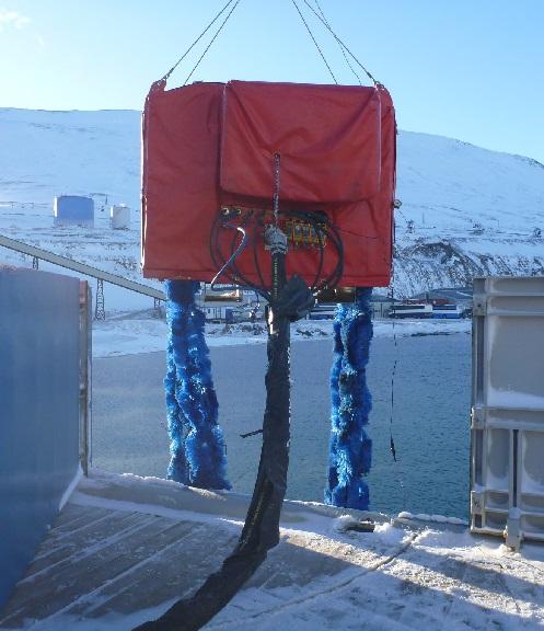 Arctic Foxtail